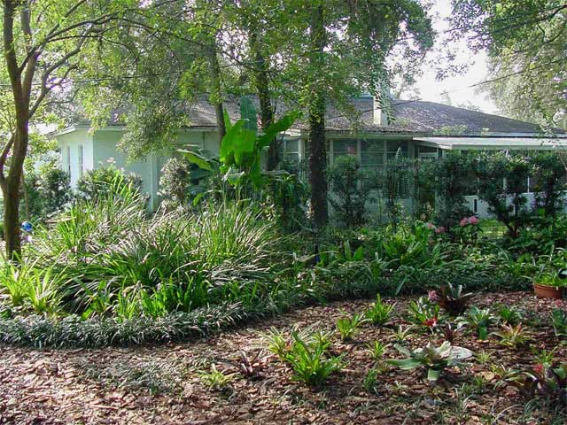 Above: Asiatic Jasmine is used in this yard for a groundcover instead of  grass. - FLORIDA-FRIENDLY LANDSCAPING